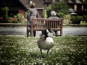 Runnymede Pleasure Grounds (7)