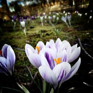 Flowers - Spring - Surrey